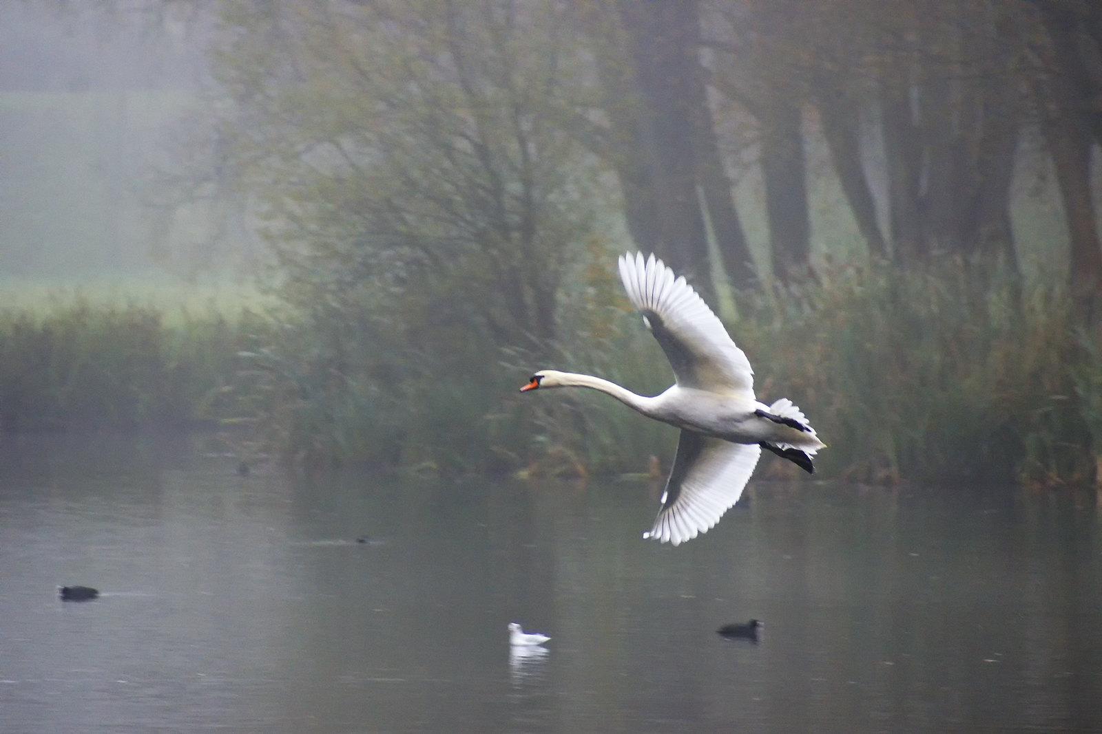 Vol dans la brume. | by renécarrère