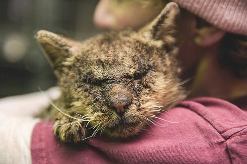 untouchable-cat-sarcoptic-mange-hugged-valentino-4-1