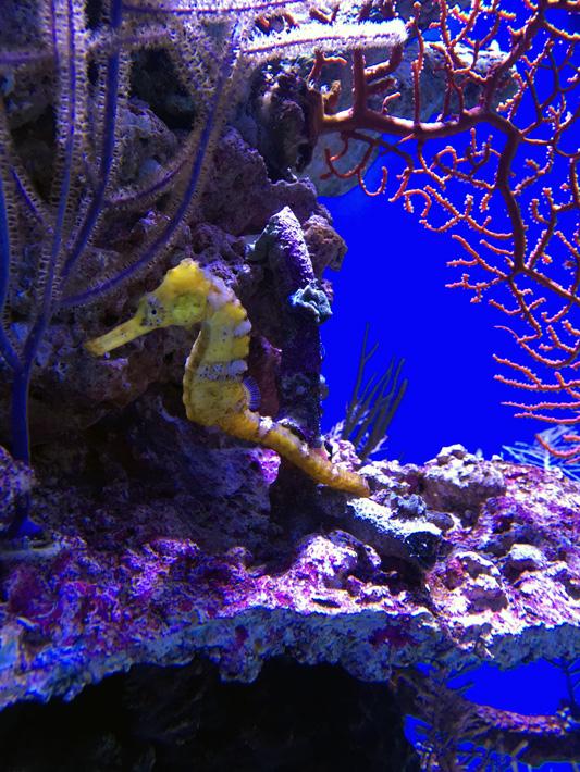 060516_aquarium40