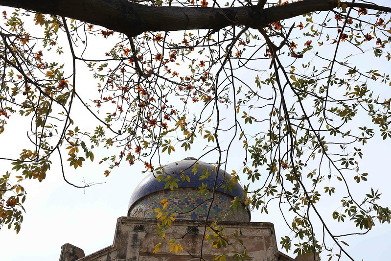 City Nature - The Spring Flowers of Semal, Subz Burj Tomb