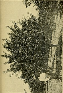 "Image from page 48 of ""West Virginia as a poultry state"" (1911) 