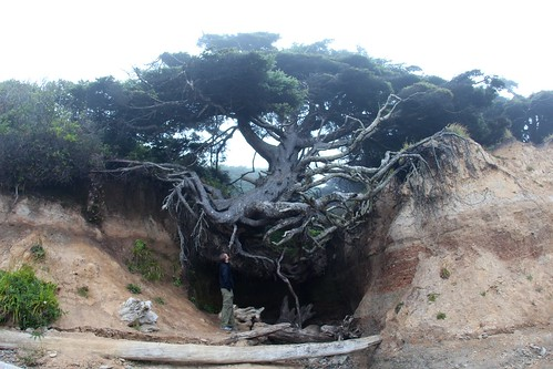 Tree Root Cave | by daveynin