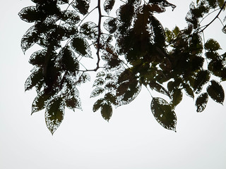 IMG_0568 Leaves at the St George Church, Penang