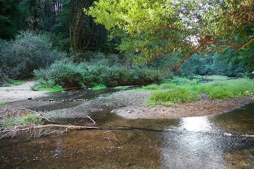 Henry Cowell State Park Nature Center