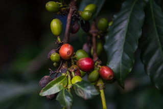 Coffee beans | by Tanya R.
