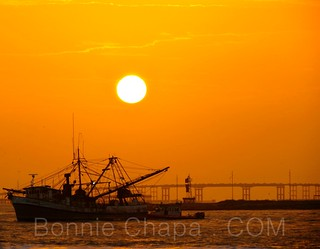 Shrimpin | by Bonnie Feaster Chapa Photographic Art