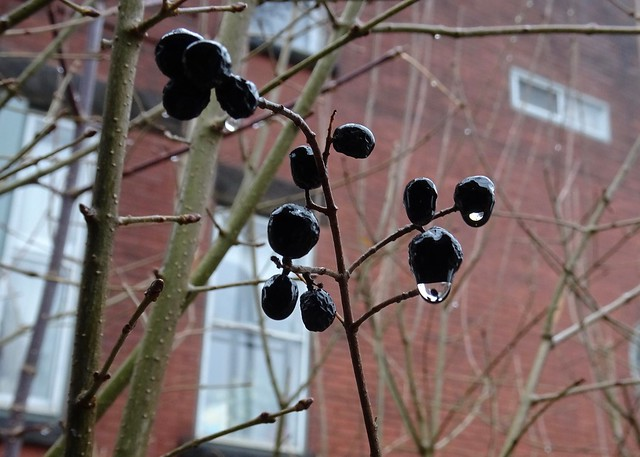 Berries and Drips
