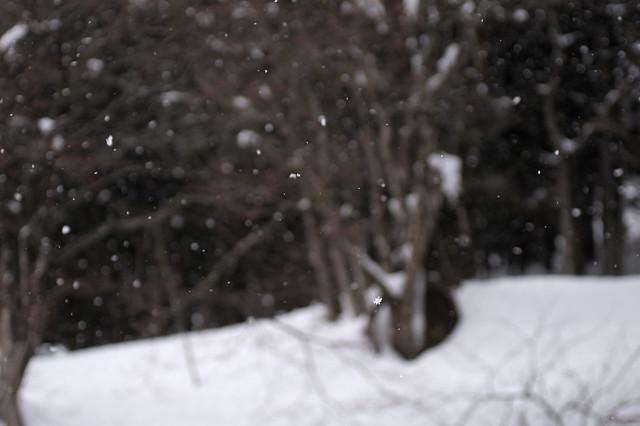 降雪_201702_NO1