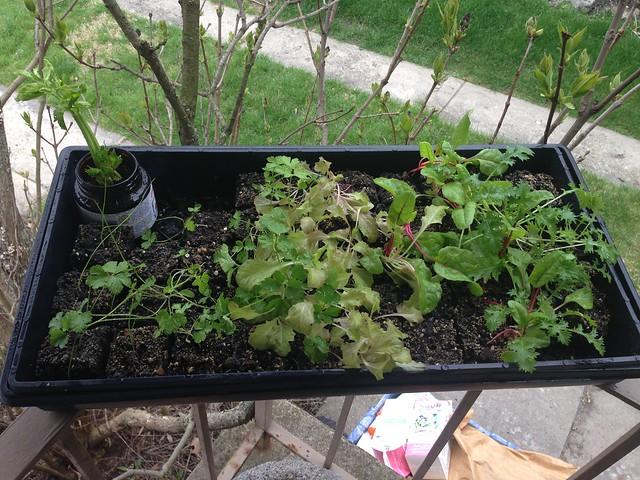 February Planting