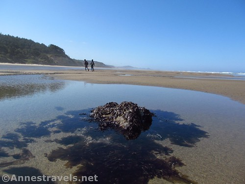 Pool of water and seaweed at low tide north of Beverly Beach, Oregon