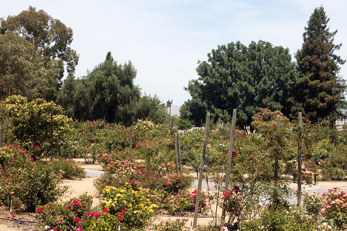 Heritage Rose Garden San Jose Canon Ef 50mm F 1 8 Ii F 8 Flickr
