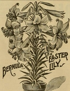 "Image from page 263 of ""Popular gardening and fruit growing; An illustrated periodical devoted to horticulture in all its branches"" (1885) 
