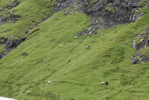 Sheep on the Slope | by susanvg