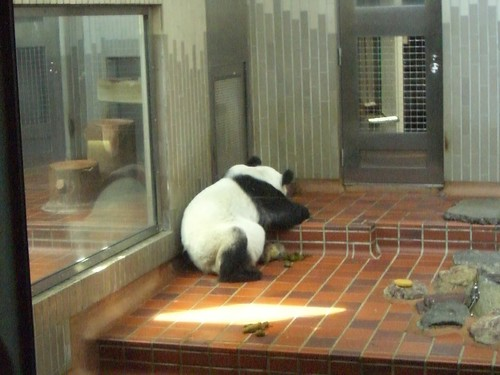 上野動物公園2007-09