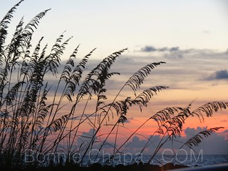 Sea Oats | by Bonnie Feaster Chapa Photographic Art