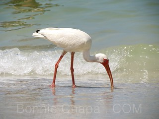 Bird On The Beach | by Bonnie Feaster Chapa Photographic Art