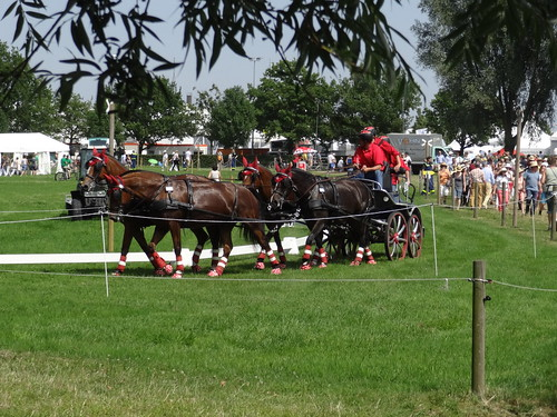 CHIO Aachen: four-in-hand driving