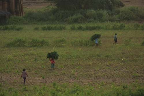 Locals working on the land, Bagan