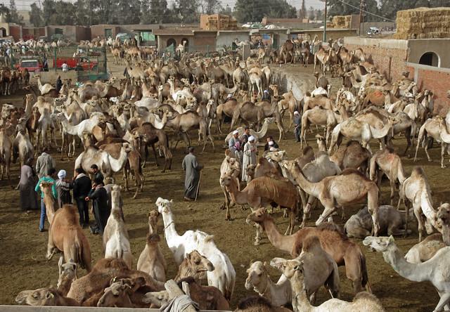 CamelMarket1-09