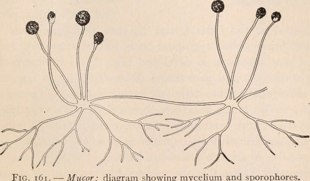 image from page 80 of a textbook of botany for colleges a flickr