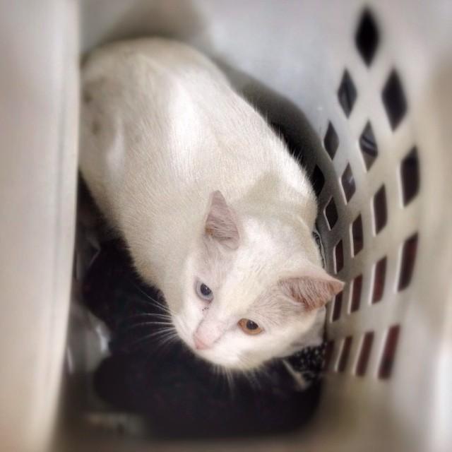 365 days of cat cuddling 11sept2014 i open the laundry b flickr