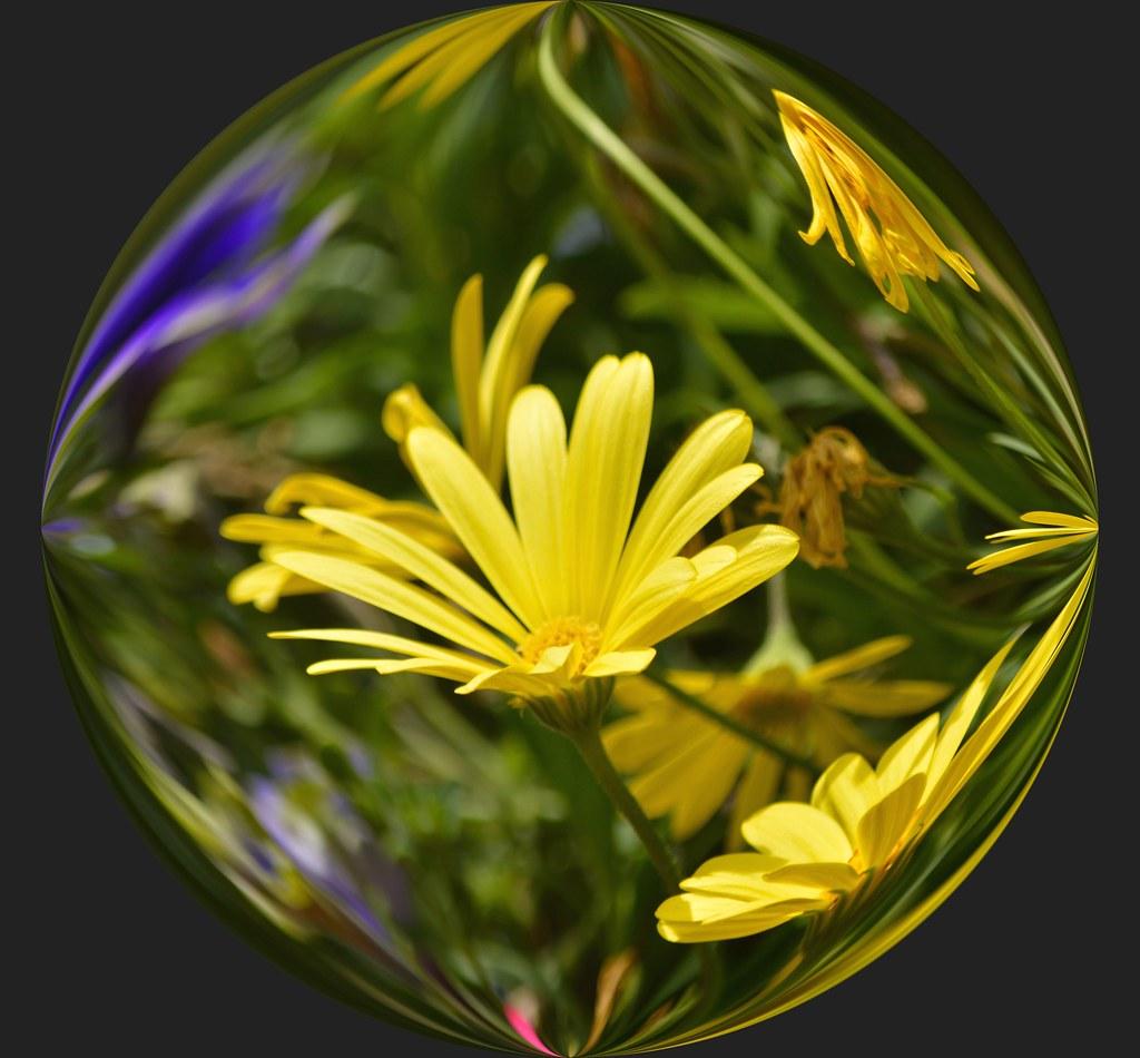 Yellow Flower Sphere Yellow Flower Garden In A Crystal Bal Flickr