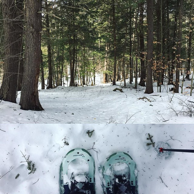 Nice day to snowshoe through the back yard.