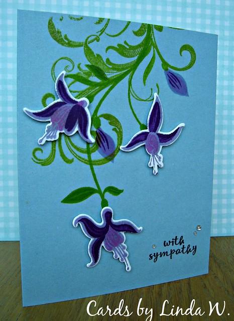 Fuchsia sympathy