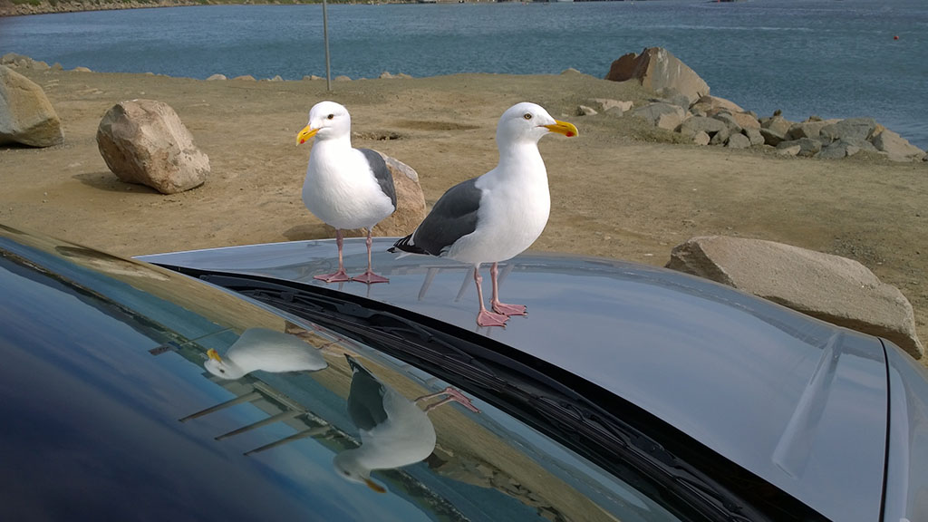 Gulls_from_outside