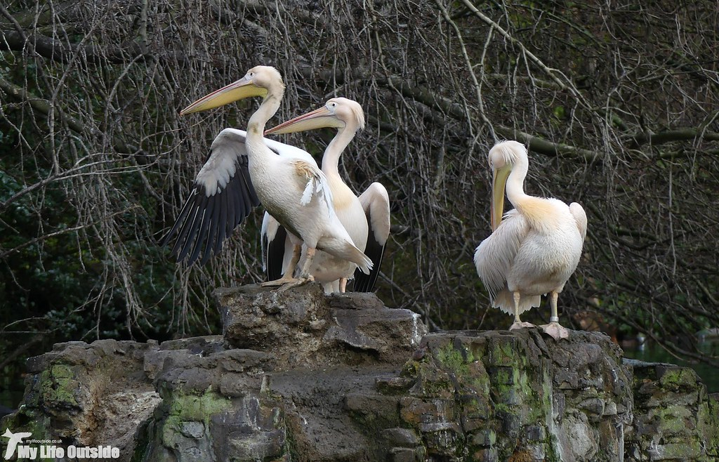 P1060708 - Pelican, London
