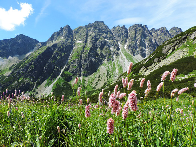 Wildflower Bloom: Mengusovská Valley, High Tatras, Slovakia