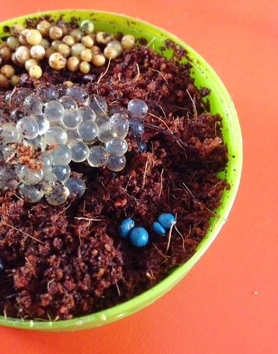 Can anyone identify the blue insect eggs found in a dutch - Identifying insect eggs in the garden ...