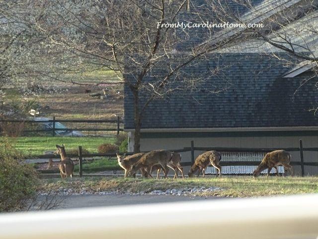 Deer herd visit -1