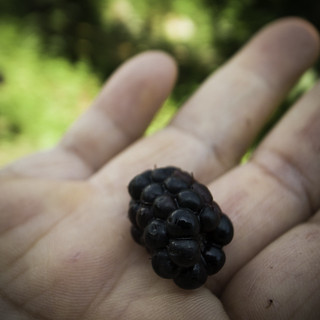 Blackberry Straight from the Bush | by jacob schere [in the 03 strategically planning]