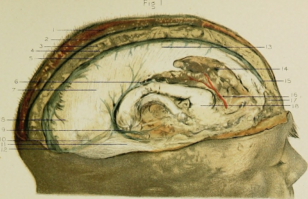Image From Page 72 Of Regional Anatomy In Its Relation To Flickr