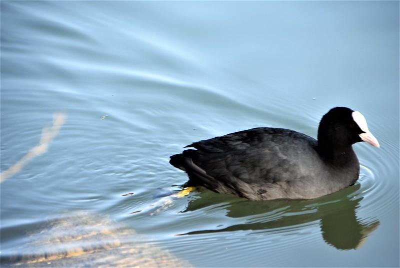 Ducks 12.03 (11)