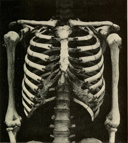 "Image from page 42 of ""The problem of age, growth, and death; a study of cytomorphosis, based on lectures at the Lowell Institute, March 1907"" (1908) 