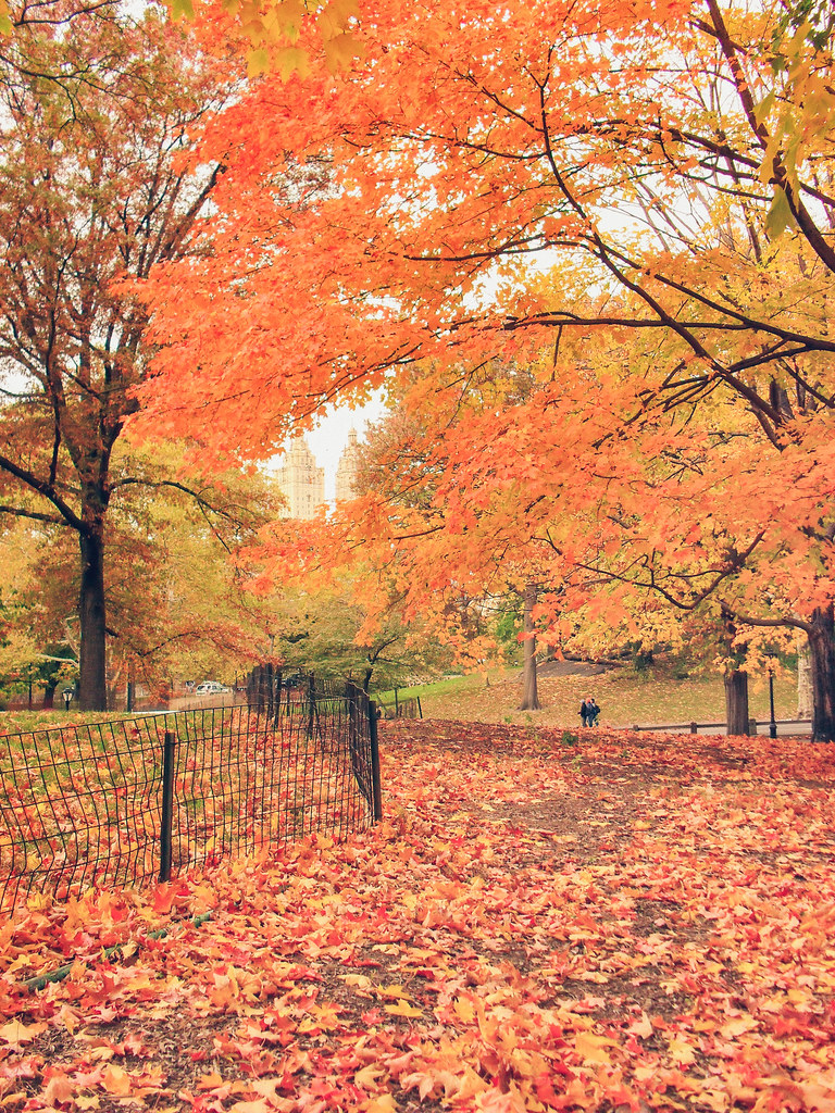 central park autumn leaves and trees new york city flickr