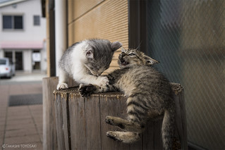Cat Memories 2014/10/07 | by Takashi Toyosaki