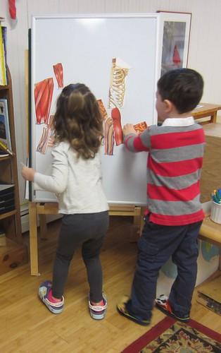 where do the intestines go?