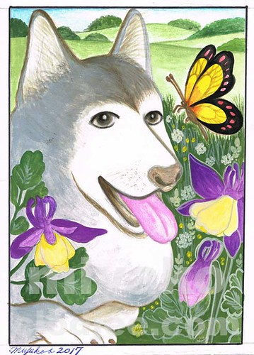 Malamute dog with butterfly and colombines