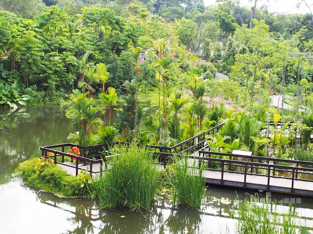 keppel discovery wetlands, learning forest, orchid island, sbg, singapore, singapore botanic gardens, sph walk of the giants, unesco, where to go in singapore,pulai marsh