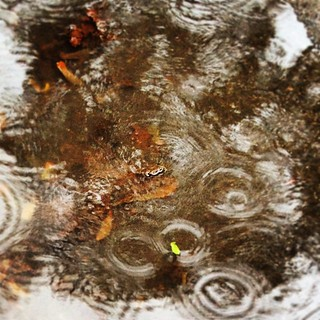 Rainy. #raindrops #textures #flow30daysnature #findingbeauty | by jensrealia