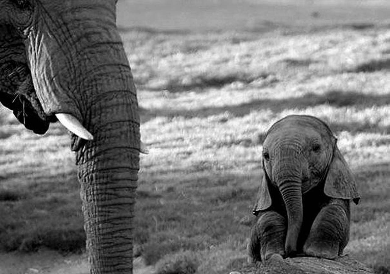 27 Adorable & Tiny Animals That Are Too Cute To Handle #7: Elephant