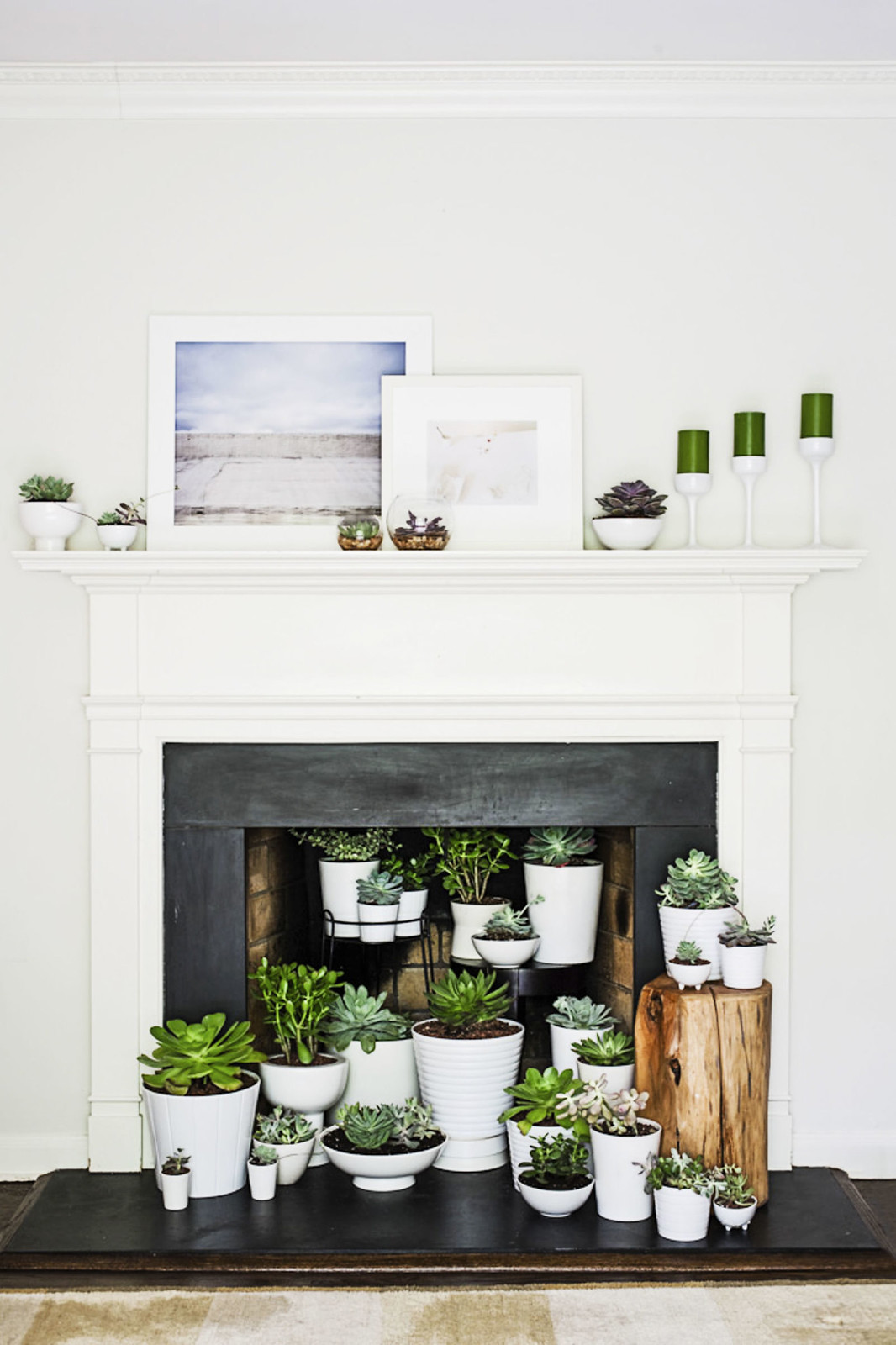 Potted plants in fireplace