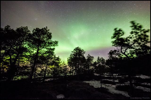 Norrskenet och skogen