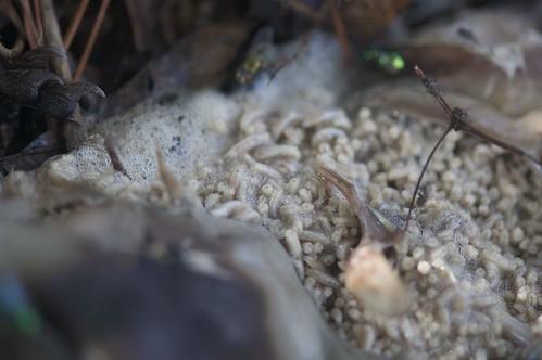 Maggots In Good Natured Dog Food