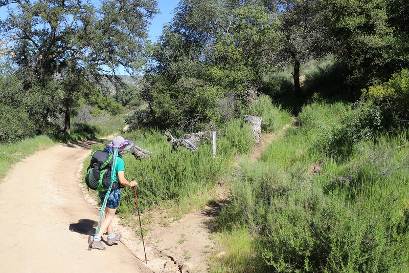 We begin climbing up out of Hauser Canyon on the PCT at mile 16
