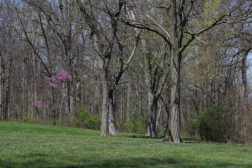 IMG_10070_Bare_Trees_&_Redbud