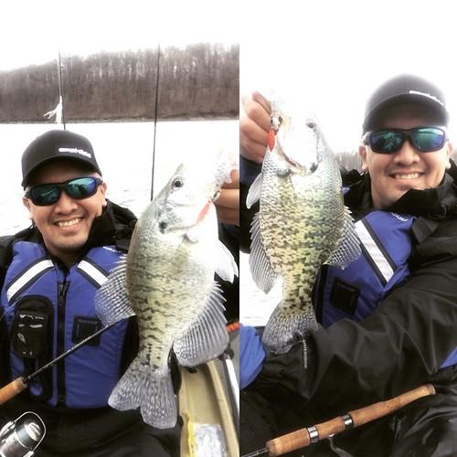 Kentucky Lake Crappies